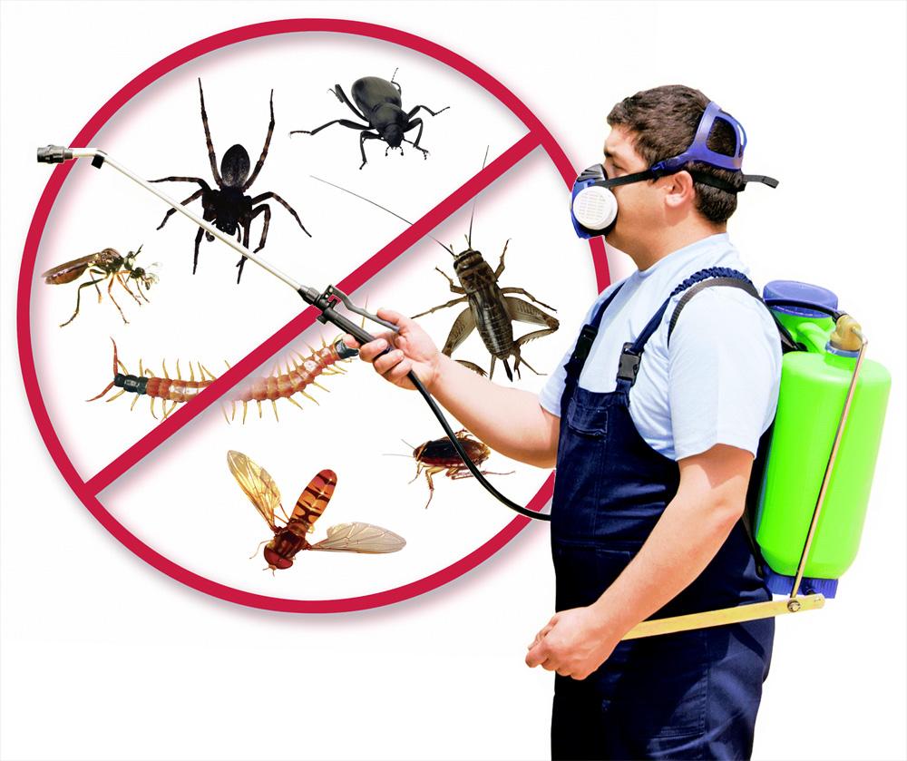 شركة مكافحة حشرات بجدة - خدمات السعودية