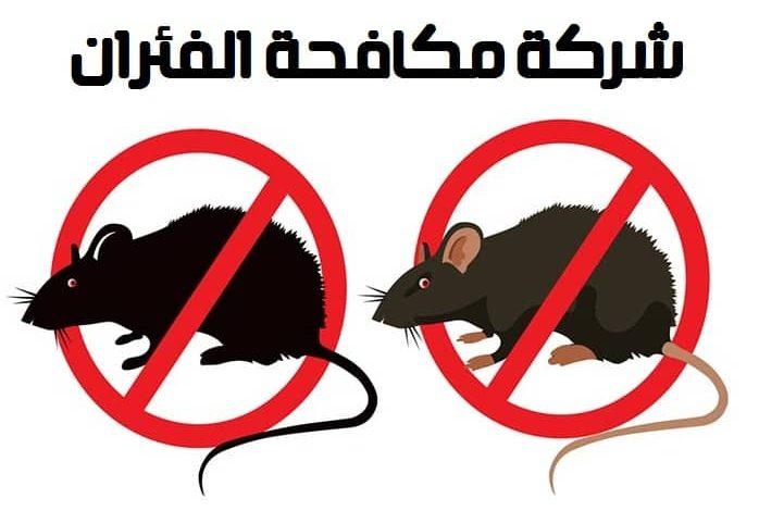 شركة-مكافحة-الفئران (1)